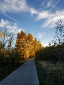 fall-sidewalk-2016